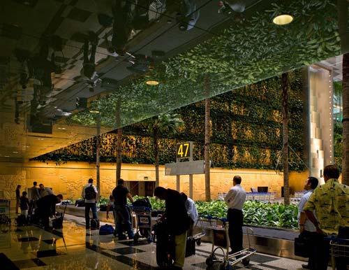 樟宜机场3号候机楼室内景观-图片2