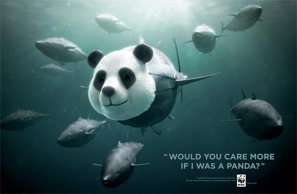 WWF Bluefin Tuna overfishing: Panda