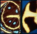 蝴蝶翅膀图案设计的字母表